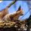 Lov na veverku – Finsko