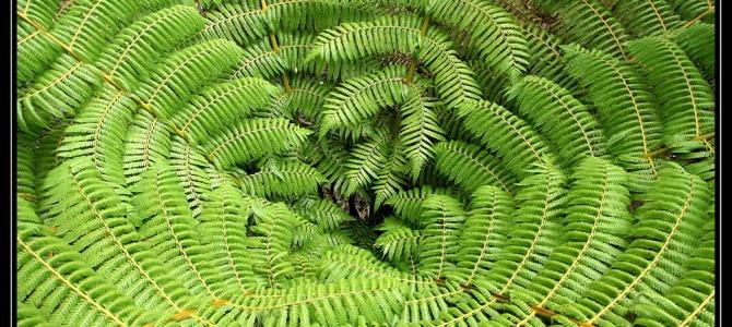Trek Tasman Abel – Nový Zéland