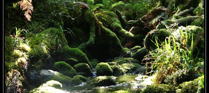 Dvoudenní trek Copland – Nový Zéland