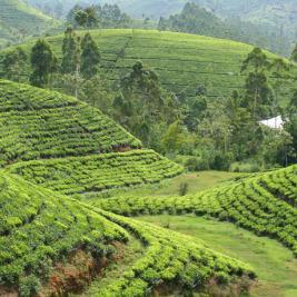 Cestopis: Srí Lanka 2013