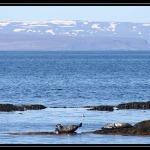 ICELAND 0379