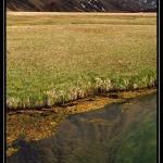 ICELAND 2481