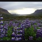 ICELAND 3171