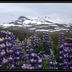 ICELAND 3181