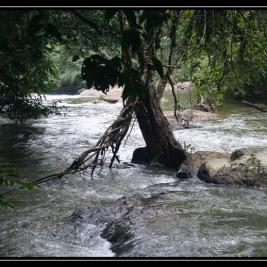 Národní park Khao Yai – procházka džunglí – Thajsko