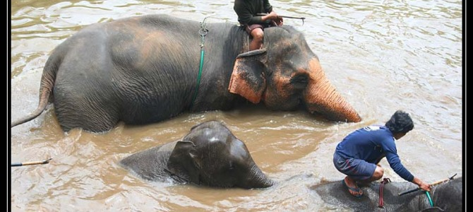Sloni vChiang Mai – Thajsko