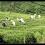 Cesta do Haputale a továrna na čaj – Srí Lanka