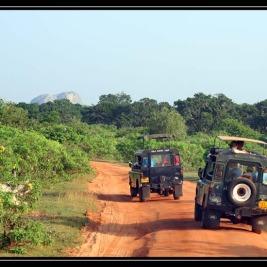 Safari a národní park Yalla – Srí Lanka