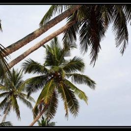 Tangalle – Srí Lanka