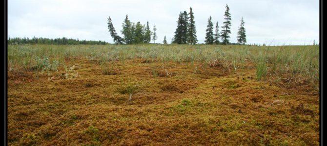 Aljaška má 90% rozpočtu z ropy – cestopis Aljaška den IV.