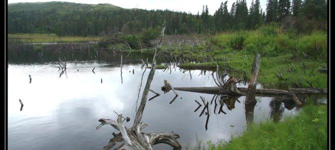 Bobří hráz je kousek od super výšlapu – cestopis Aljaška den VI.