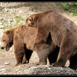 V Anchorage se bijí medvědi hned vedle tygrů – cestopis Aljaška den XIV.